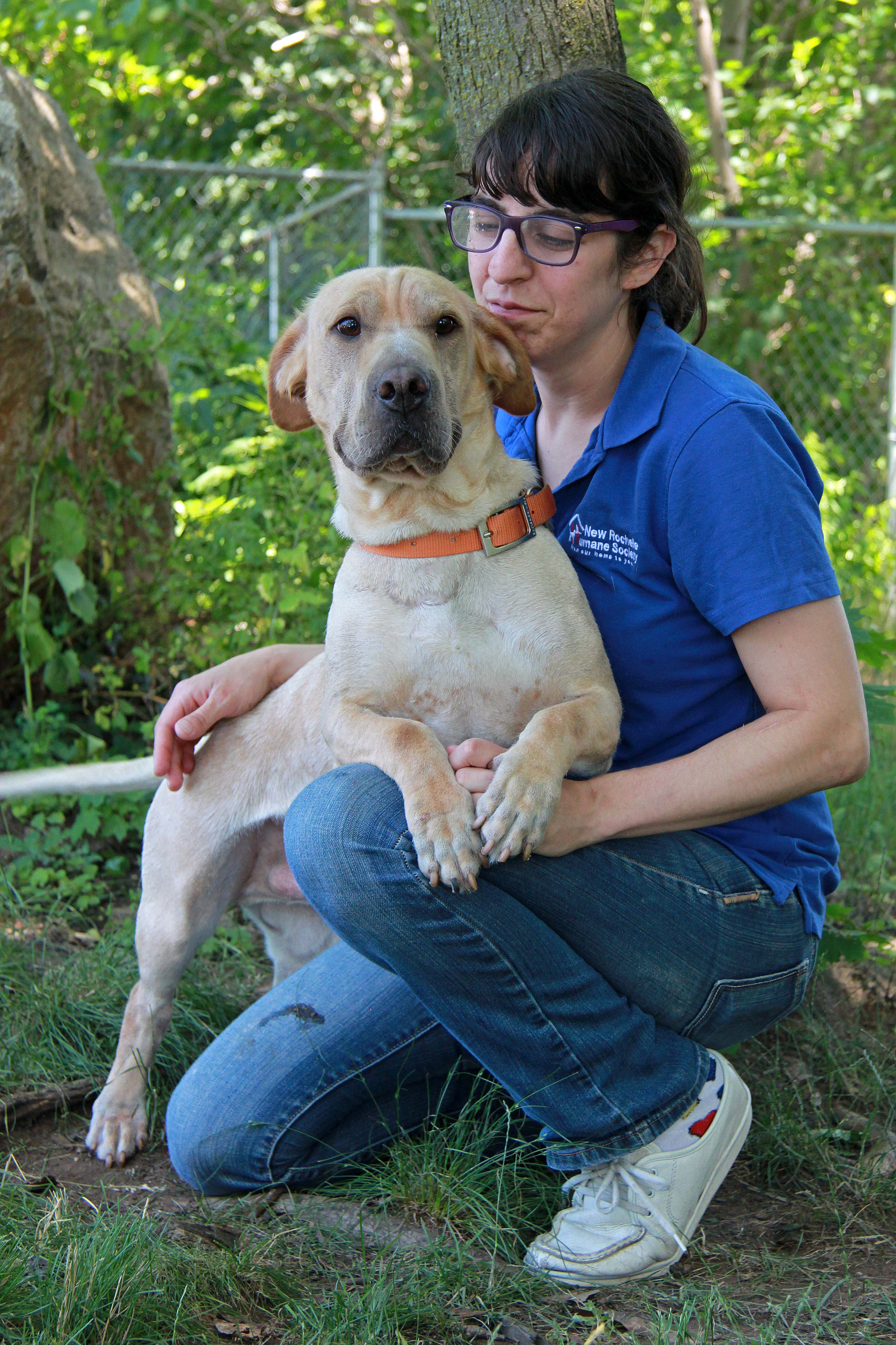 Chuckie Likes Comfy Laps And Lots Of Love Pet Of The Week